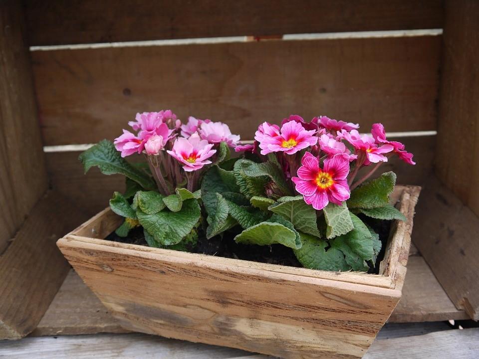 Neem een houten bloembak als je je tuin wil opleuken!